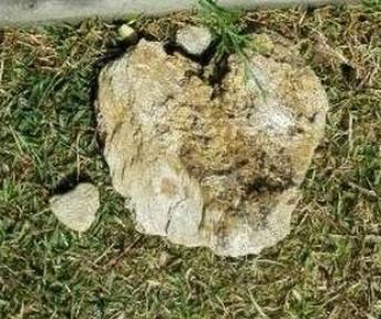 alicia dos piedras